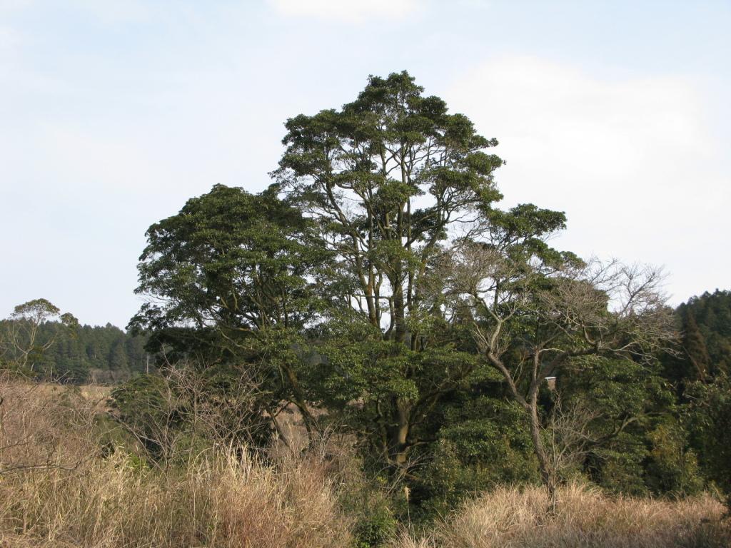 大きく育った木をみるのはうれしいです。