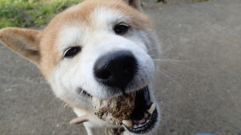 ほらっ、これ投げて!