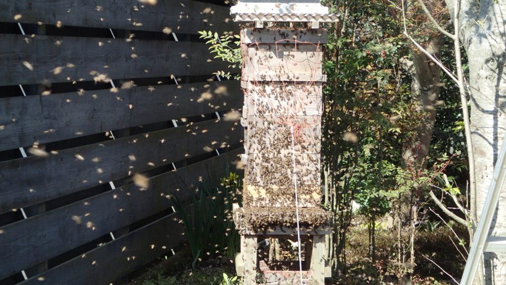 辺り一面が蜂、蜂、この辺りが見所です。
