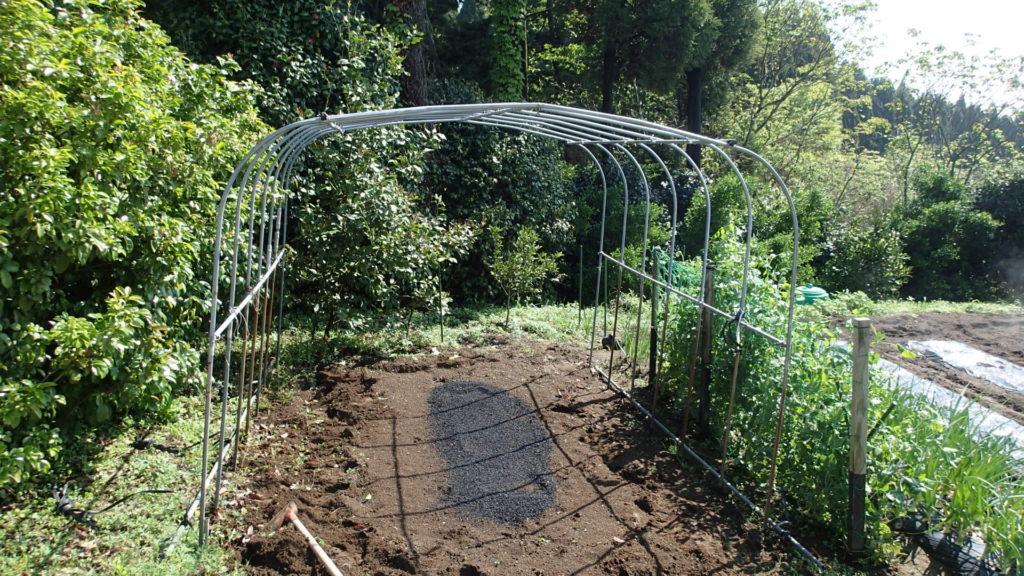 トマトの苗は毎年ここに植えます。