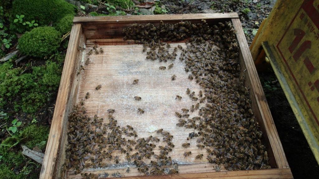 ふたにもスノコにもたくさんの蜂たちがいました。
