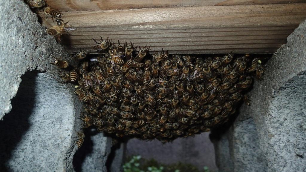金網底にもたくさんの蜂達がいます。