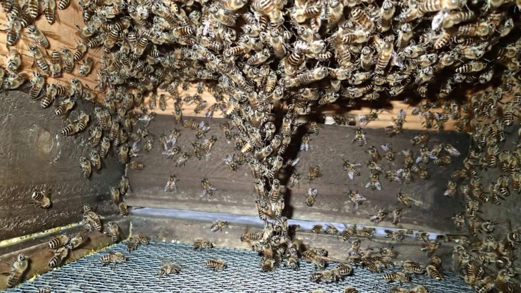蜂の繋がりが外の底網の蜂に繋がっている?