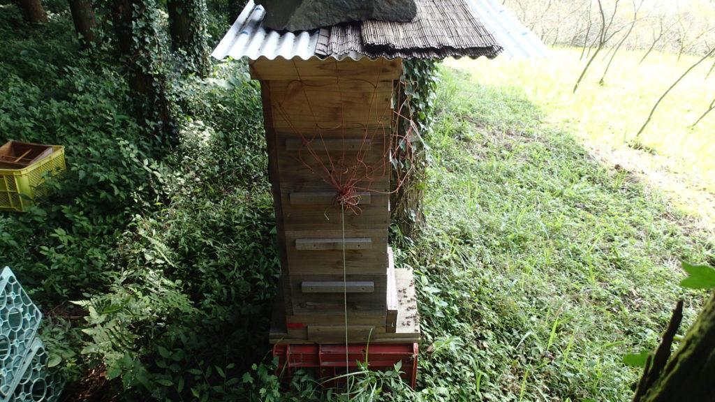 今日の採蜜巣箱です。5段