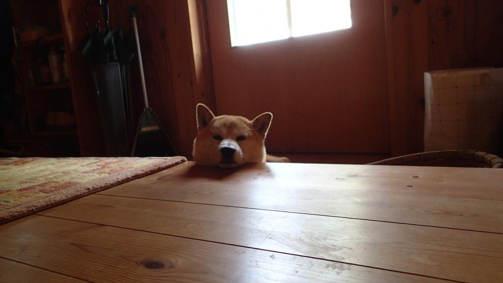 いつも犬は待っています。