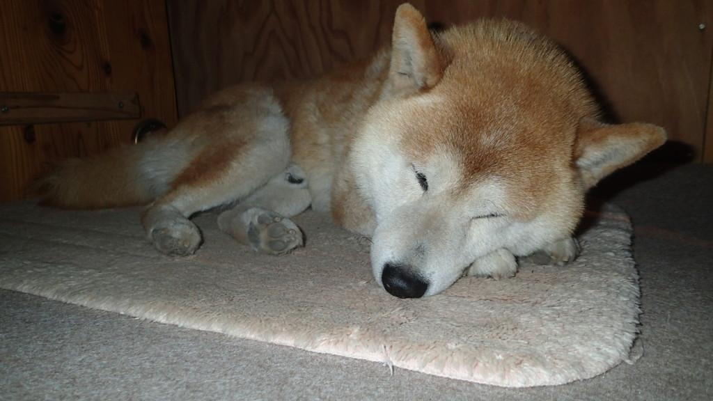 前足は時に枕になります。