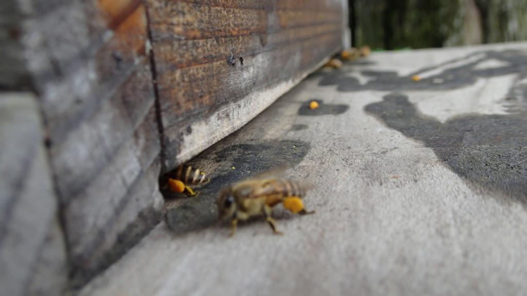 花粉の持ち込みいっぱいです。