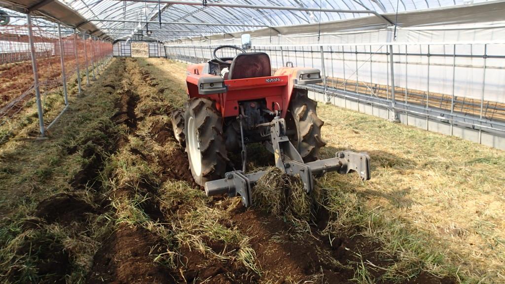 緑肥も終わり、すきこみます。