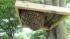 分蜂捕獲板と孫分蜂