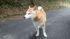 柴犬タロー、新年の挨拶