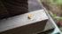 雄蜂の巣蓋確認へ