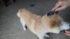 痩せ犬タロー